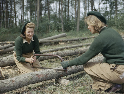 Land Army girls sawing larch poles for use as pit props at the Women's Timber Corps training camp at Culford in Suffolk.