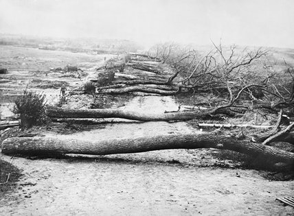 Trees cut down by the Germans across a road near Havrincourt to hinder the British advance.