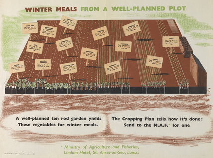 Winter Meals from a Well-planned Plot