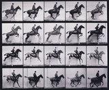 'Jumping a hurdle... bay horse Daisy'