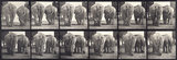 Elephants; two, walking
