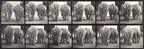 Elephants; two, walking