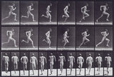 Running at full speed; from 'Animal Locomotion. An Electro-Photographic Investigation of Consecutive Phases of Animal Movement 1872-1885'