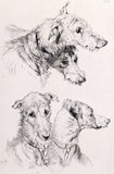 The Four Irish Greyhounds