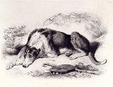 A Shepherd's Dog