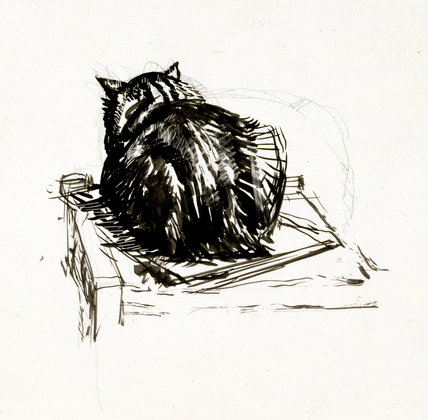 Study of a cat viewed from the back
