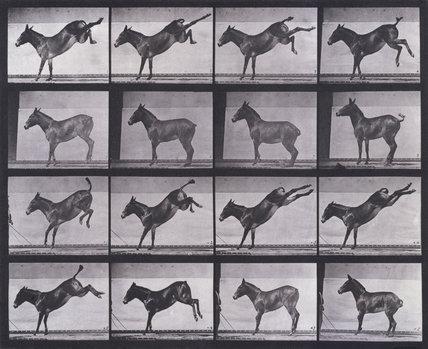 Mule, kicking, Ruth