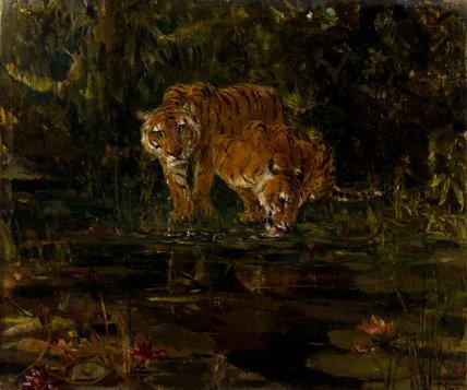 Tigers drinking