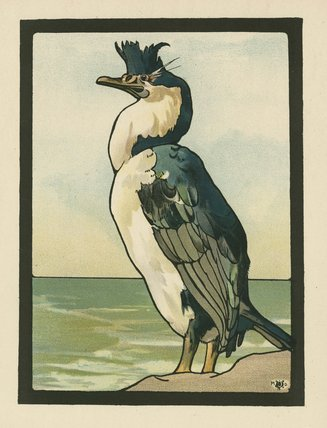 The Cormorant,from Maurice and Edward Detmold's 'Pictures from Birdland', London, J.M. Dent & Co.,1899