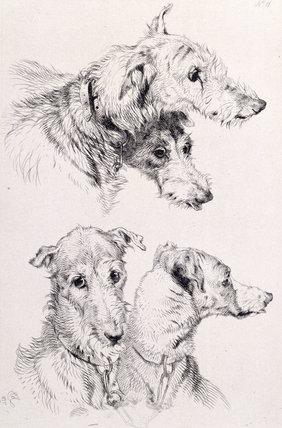 The Four Irish Greyhounds