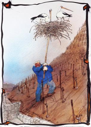 Wine - Oddbins - Stork's Nest