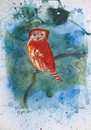 Nextinction - Pernambuco Pygmy Owl