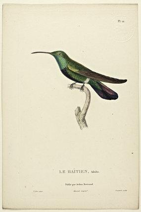 Le Haitien (Male)