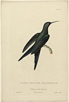 Oiseau-Mouche Hirondelle