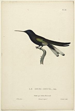 Le Demi-Deuil (Male)