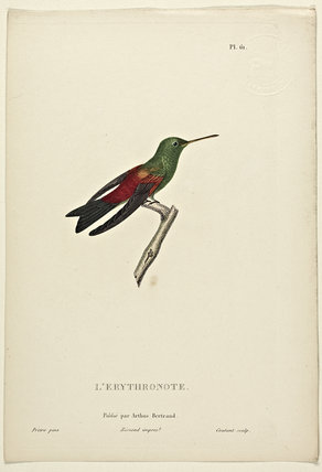 L'Erythronote