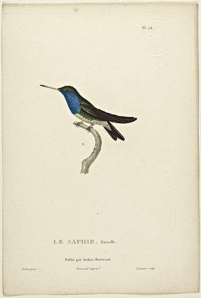 Le Saphir (Female)