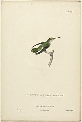 Le Petit Oiseau-Mouche