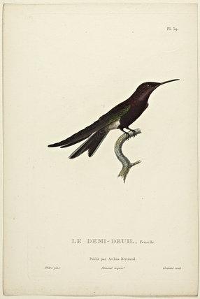Le Demi-Deuil (Female)