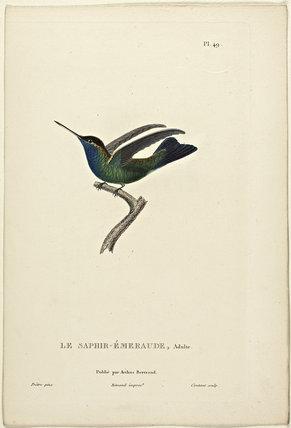 LeSaphir-Emeraude (Adult)
