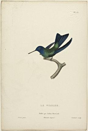 Le Wagler