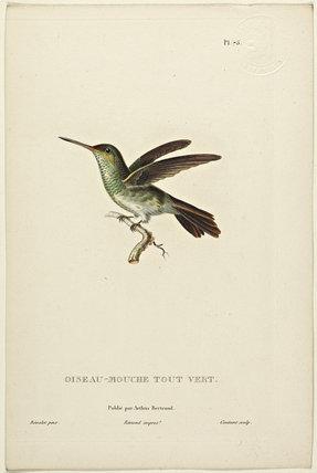 Oiseau-Mouche Tout Verte