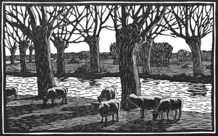 Sheep by a River