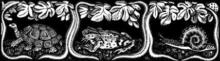 Tortoise, Frog, Snail