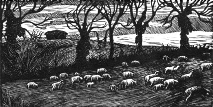 Sheep, Early Spring