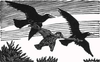 Parrot & Daws