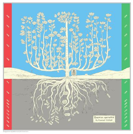 Quercus Operatica planted 1597