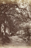 Winchmore Hill Wood, c.1870