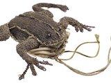 A small purse shaped like a frog; 1650-1680