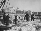 Near Blackfriars Bridge c.1930: Handling hay at Bankside