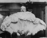 Cutler Street Warehouses 1920's: Ostrich feathers