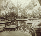 View of the Tropical Court at the Crystal Palace: 20th century