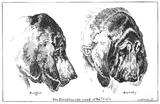 Burgho and Barnaby: 1886 -1888