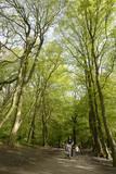 Highgate Wood; 2006