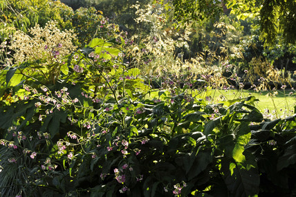 Chelsea Physic Garden; 2009