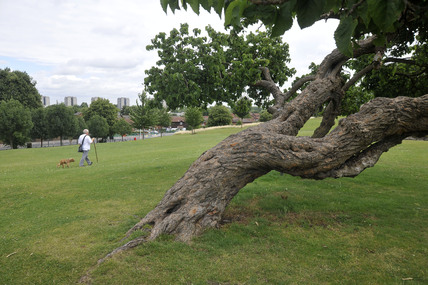 Lesnes Park; 2009
