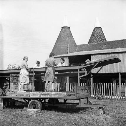 Hop pickers in Yalding, Kent: 1952