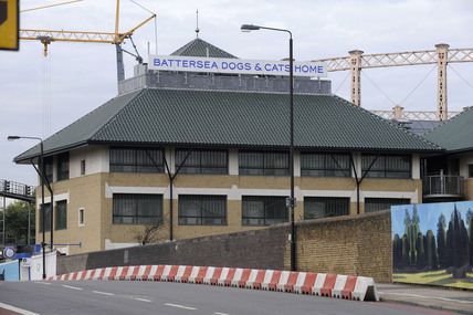 Battersea Dogs and Cats home; 2009