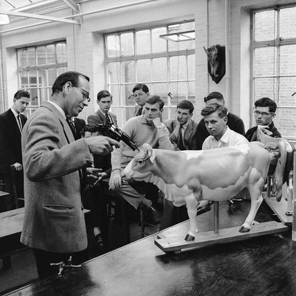 Class on how to slaughter a cow: 1960