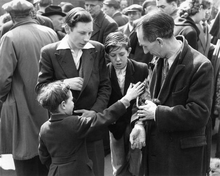 A boy stroking a kitten at the animal market in Club Row: c. 1948