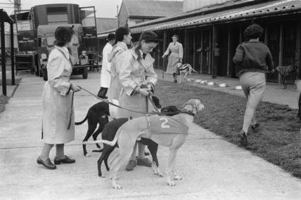Greyhound racing at the Park Royal track; 1956