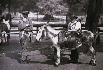 A donkey for hire on Clapham Common, c.1877.