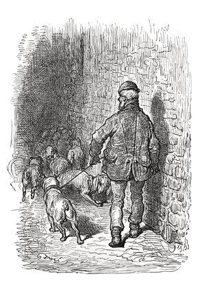 Bull dogs: 1872