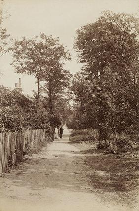 Winchmore Hill Wood; c.1870