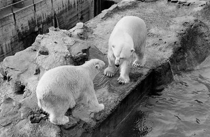 London Zoo; 1951