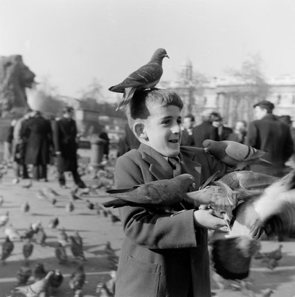 Feeding pigeons in Trafalgar Square; 1954
